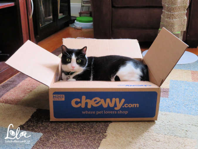Boxing Day|cats in boxes|chewy box love