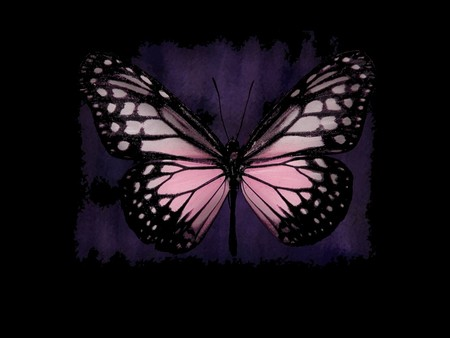 wallpaper pink butterfly - photo #27
