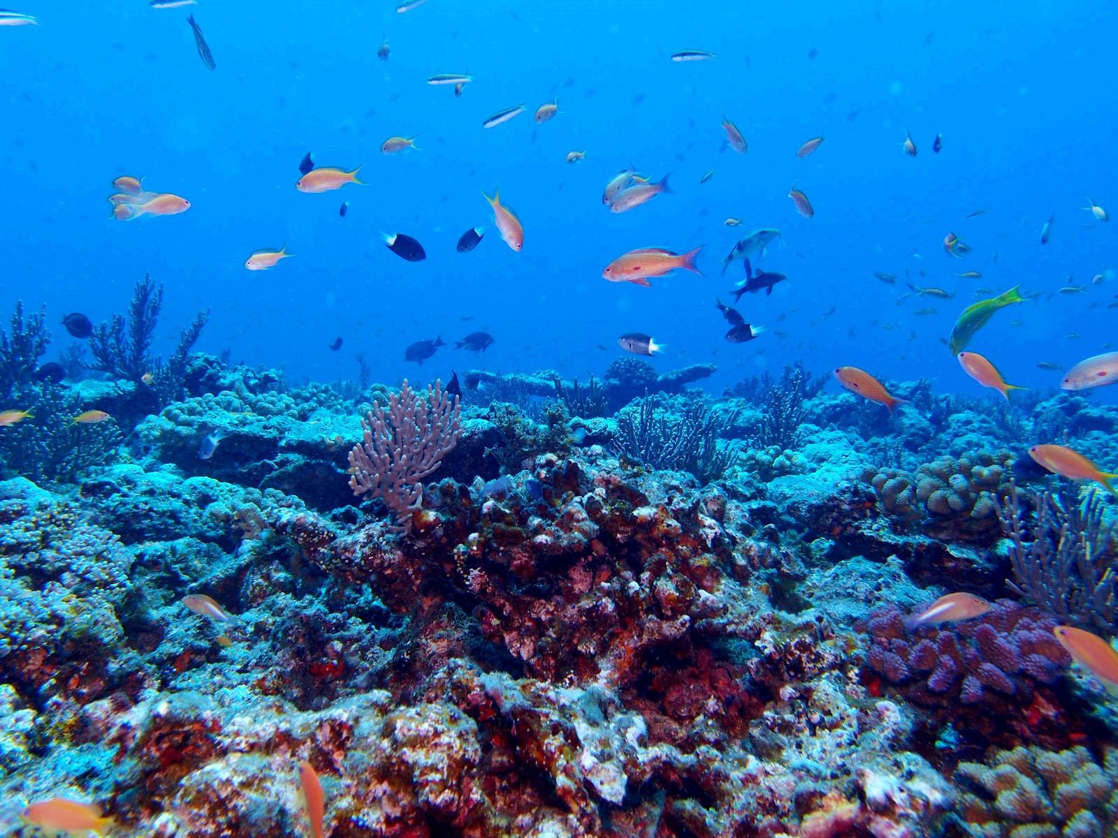 沖繩-潛水-浮潛-久米島-推薦-Okinawa-scuba-diving-snorkeling