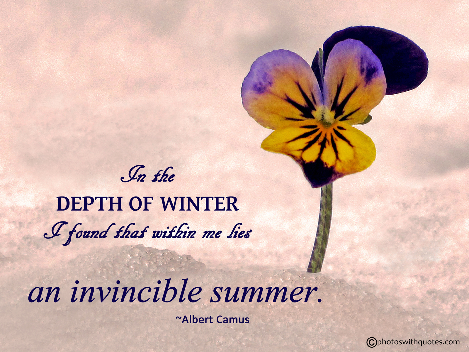 Summer Quotes: Whispers Of Hope: #MondayMusing-Seasons Change. Life Remains