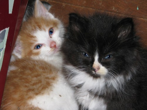 Cat Eyes---A Cat Woman's Photos: Kittens!  Cat Eyes---A Ca...