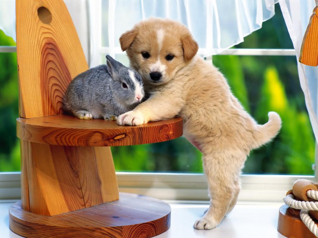 Gambar Anak Anjing Yang Lucu Lucu Dan Imut Wallpapersforfree