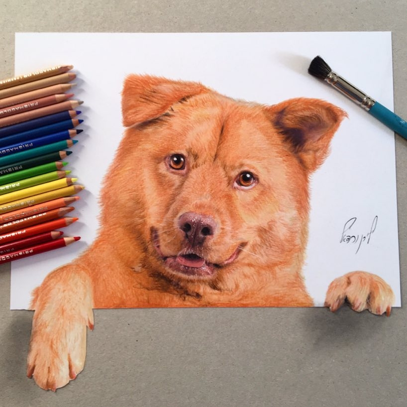 08-Liran-Vardiel-Animal-Drawings-using-Colored-Pencils-www-designstack-co