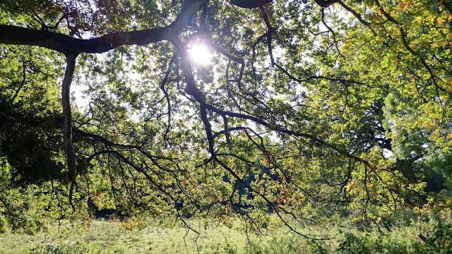Cotswold Wanderings - Bisley