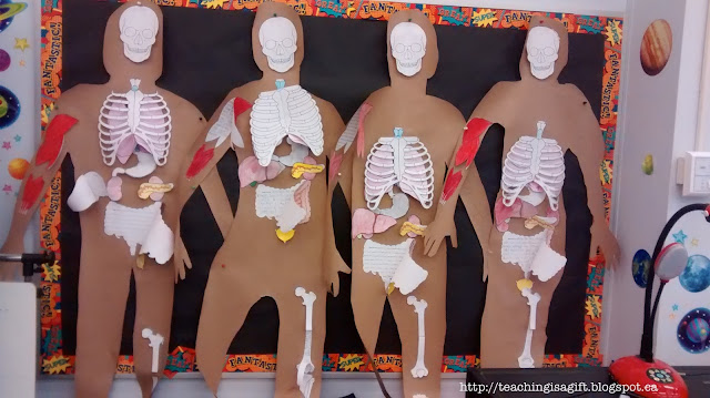 Picture of Human Organ Systems OERB @teachingisagift.blogspot.ca