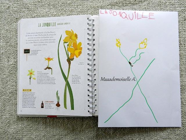 || Activité : Dessiner les fleurs d'après un herbier