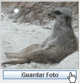 Clic en JButton para guardar foto de un Suricato sentado