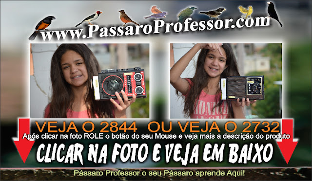 pássaro professor 2844