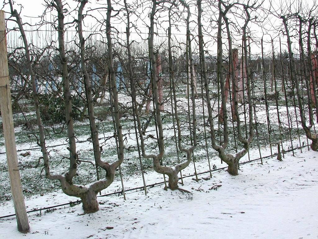 Comment Planter Un Arbre Fruitier comment planter les arbres fruitiers ? conseils de