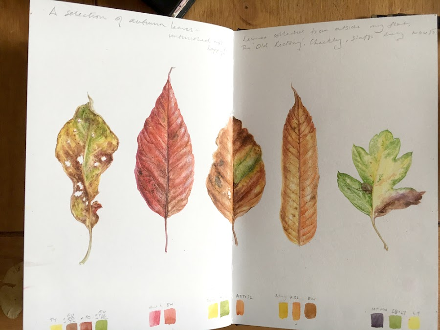 leaf paintings in a sketchbook