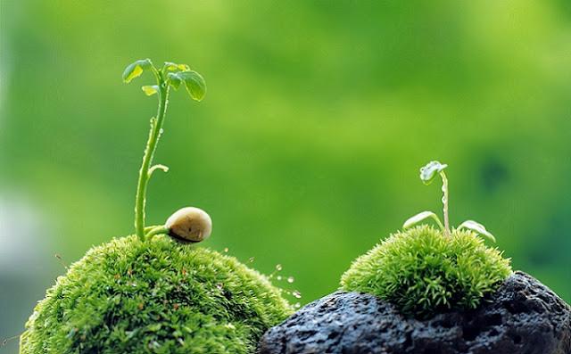 Jika Kita Harus Menunggu Tumbuhan ini Berbunga Super Lama Sekali