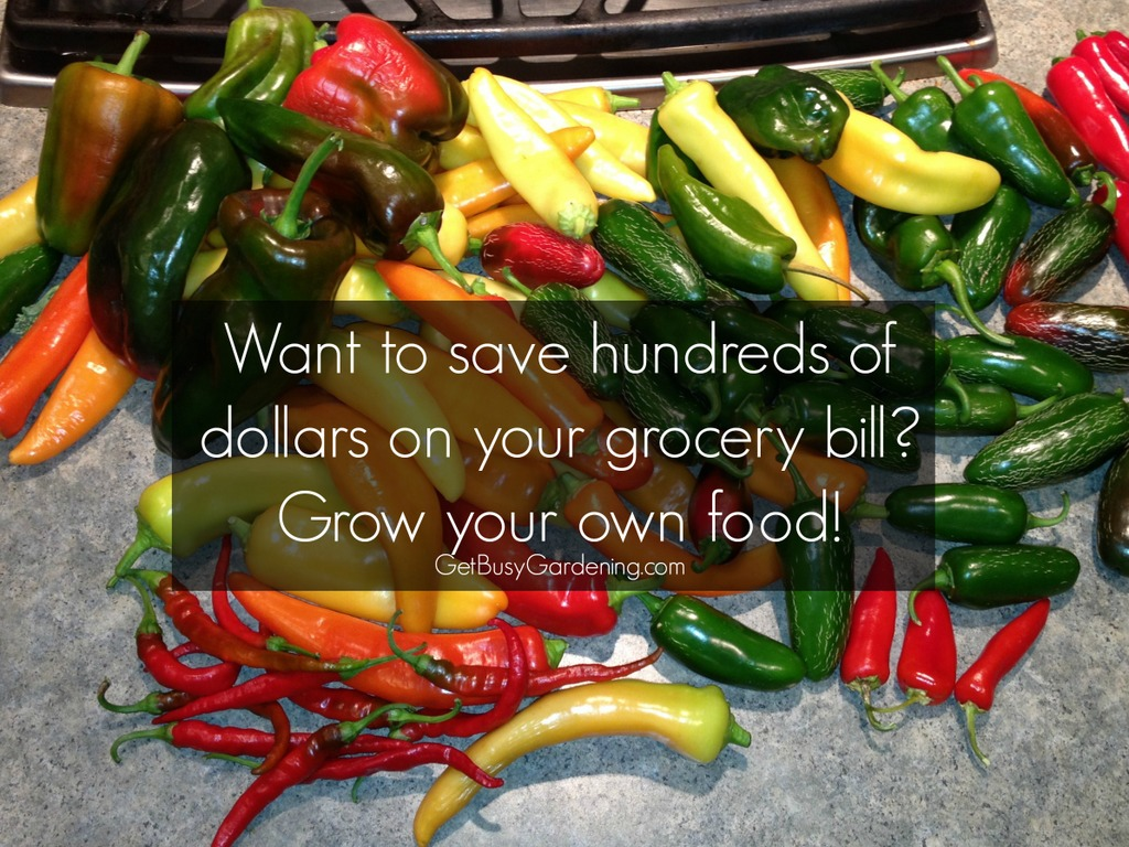 Want to save hundreds on your grocery bill? grow your own food.
