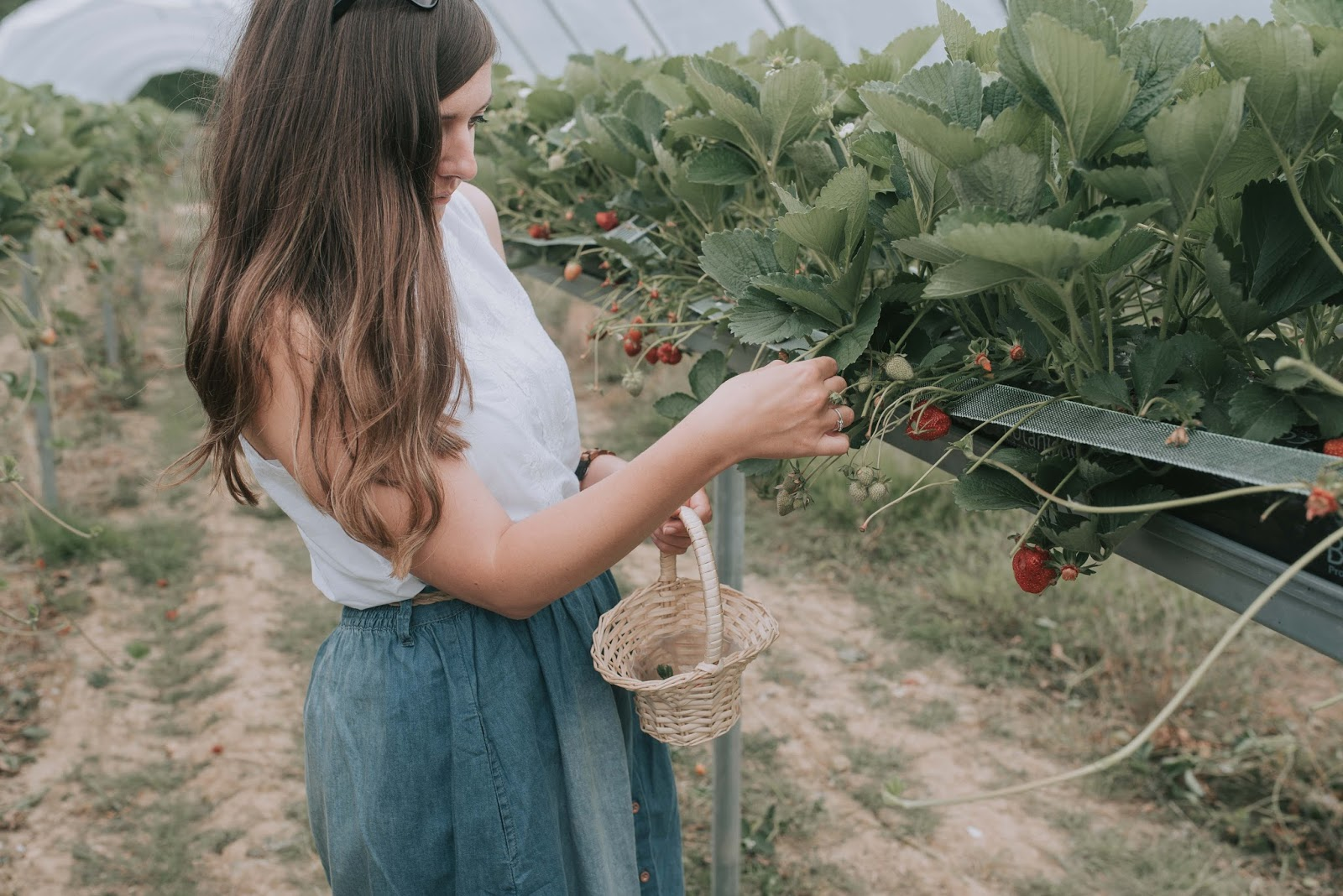 Strawberry Picking In Norfolk