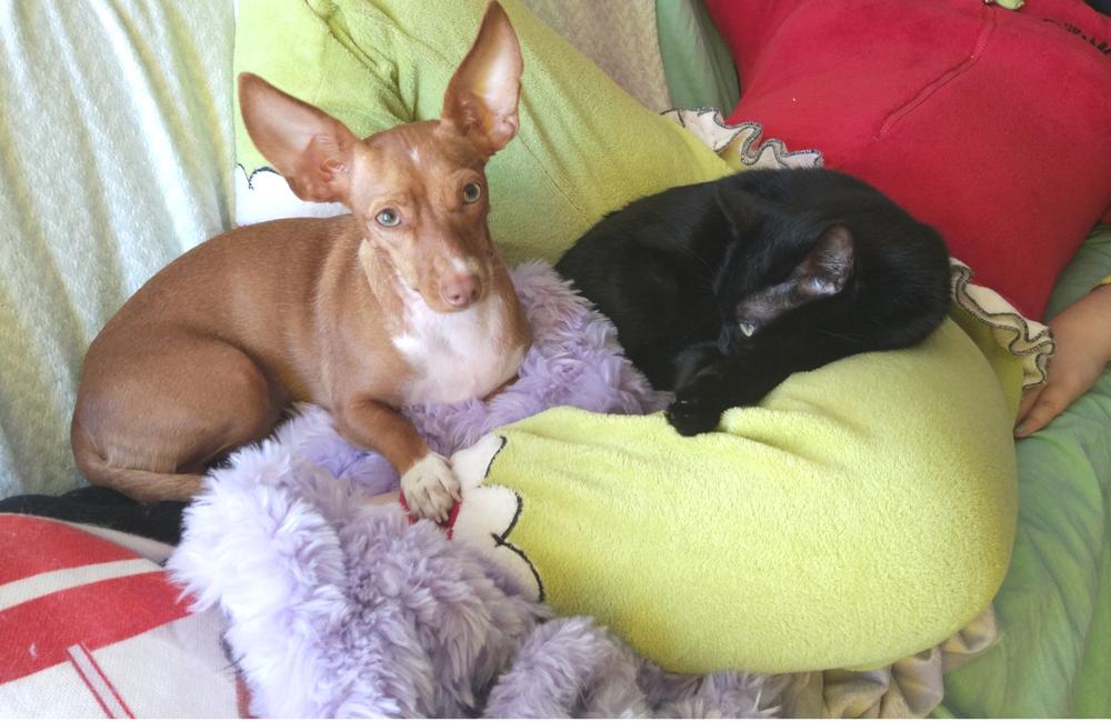 Gato e cão + P&T + pet + dog and cat + como ter cão e gato + blogue ela e ele + ele e ela + animais de estimação + blogue de casal + telma e pedro + maria preta e chiclet