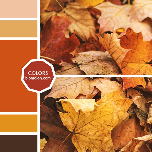 variedad_en_color_moodboard_29