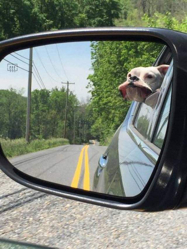 Cute dogs - part 168, funny dog photos, best cute dog images