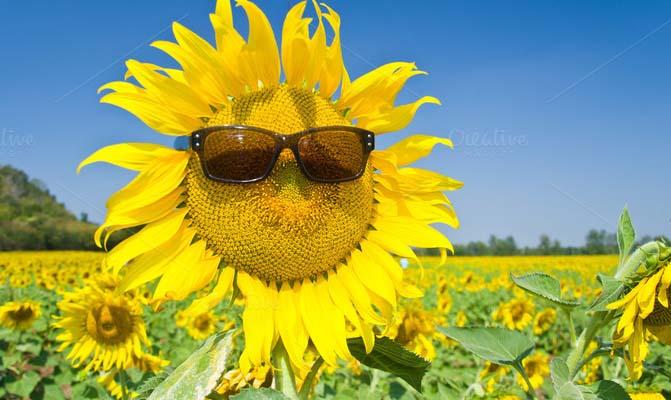 Contoh Teks Laporan Hasil Observasi Bunga Matahari Kumpulan Contoh Laporan