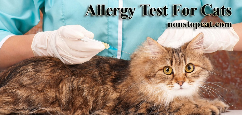 Allergy Test For Cats