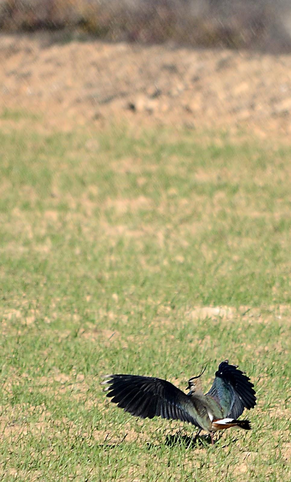 Mica en 4 patas ofrece su culo - 2 7