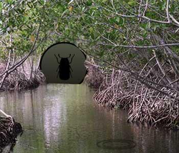 Juegos de Escape - Mangrove Forest Escape