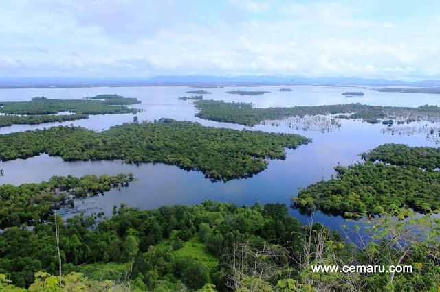 rainforest ecosystem