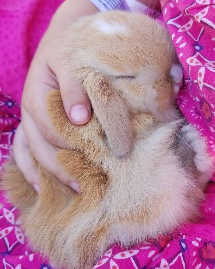 fluffy bunny, fluffy rabbit, bunny fluffy, fluffy bunnies, fluffy rabbits, rabbit fluffy