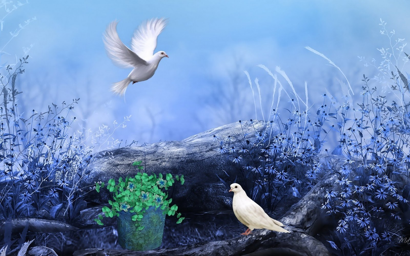 White Pigeons Nature Flowers Colors Paint HD Wallpaper   BEAUTIFUL     White Pigeons Nature Flowers Colors Paint HD Wallpaper