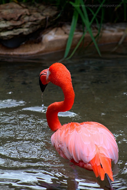 Flamingo (c) Rosevine Cottage Girls