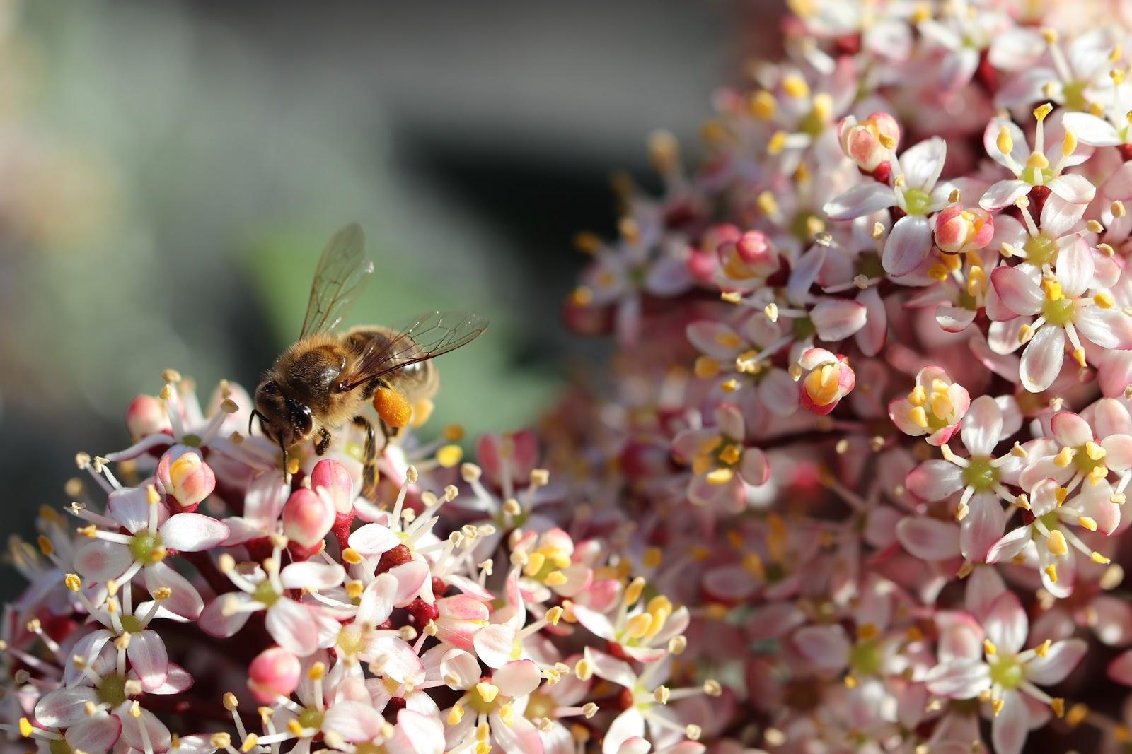 comment-aider-les-abeilles-a-notre-echelle