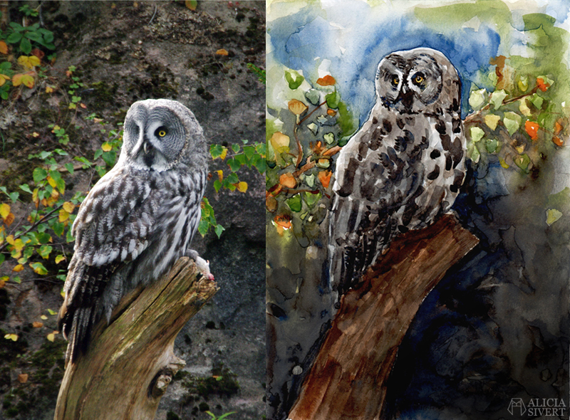 Great grey owl watercolour by Alicia Sivertsson. lappuggla strix nebulosa aliciasivert alicia sivert akvarell aquarelle water color water colour watercolor owl uggla måla målning painting konst art referensbild jämförelse
