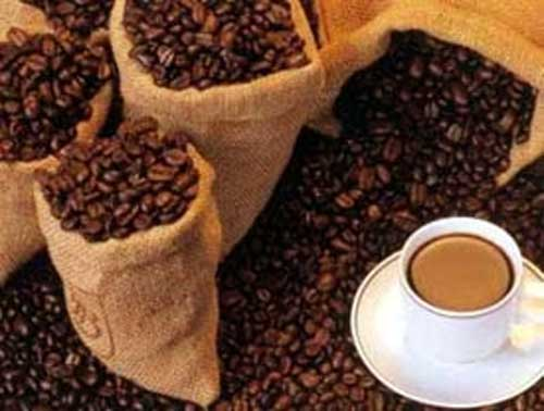 kumpulan sejarah kopi luwak