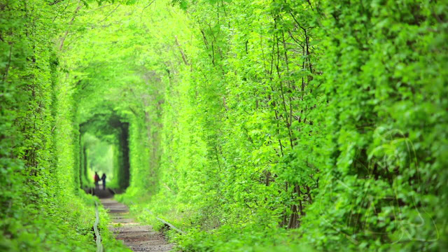 Tunnel of Love: Klevan, Ukraine 8 Places to Visit Before You Die