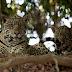 """""""Wild Brazil"""" é destaque no canal BBC Earth nesta sexta"""