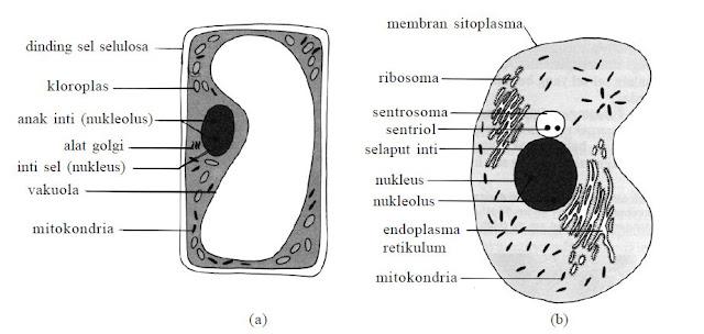 Pengertian Sel, Struktur dan Fungsi Organel Sel