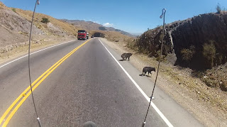 Cuidado com os animais na estrada.