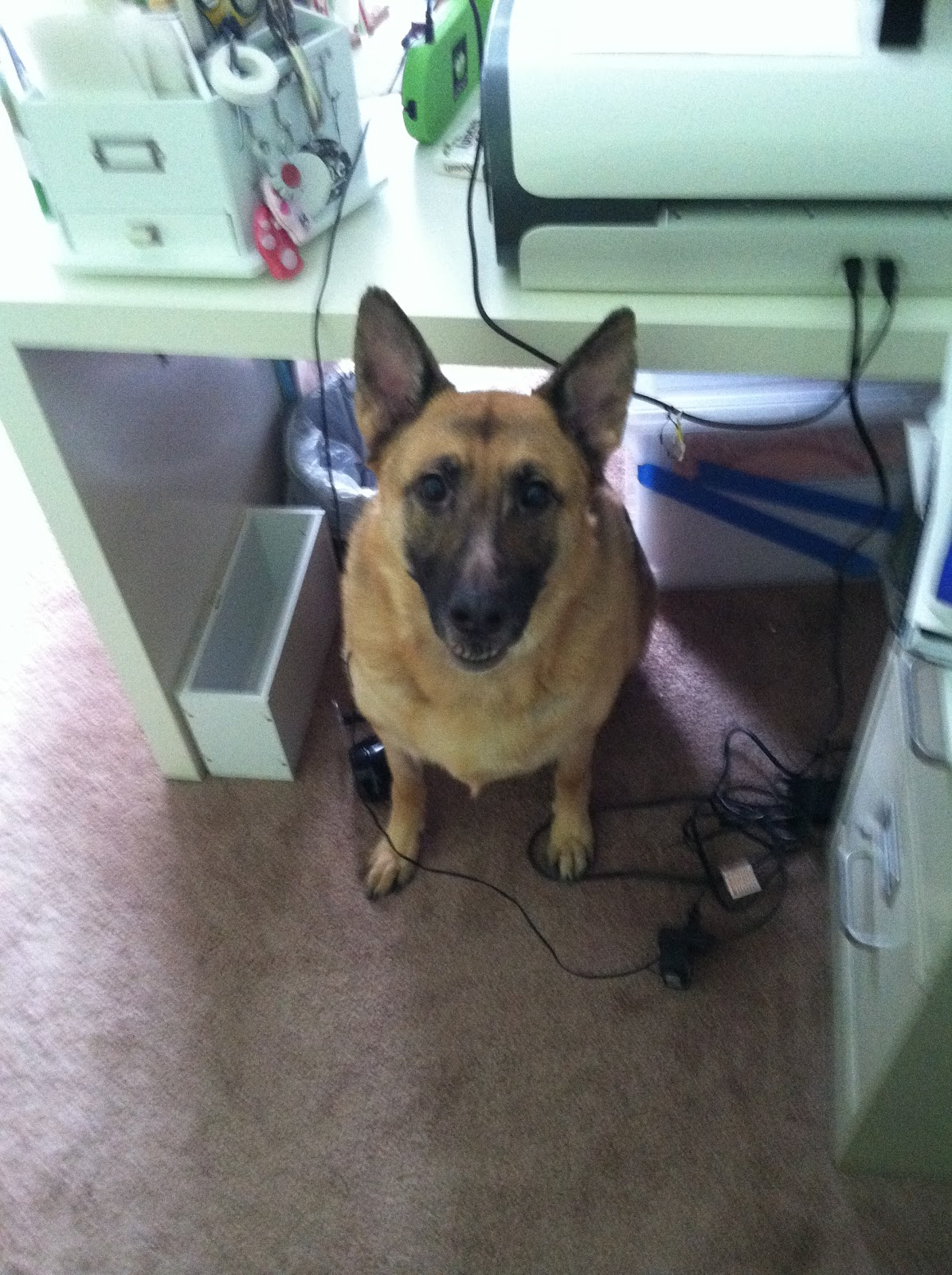 German Shepherd Wont Eat Her Food Out Of Nowhere