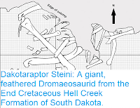 http://sciencythoughts.blogspot.co.uk/2015/10/dakotaraptor-steini-giant-feathered.html