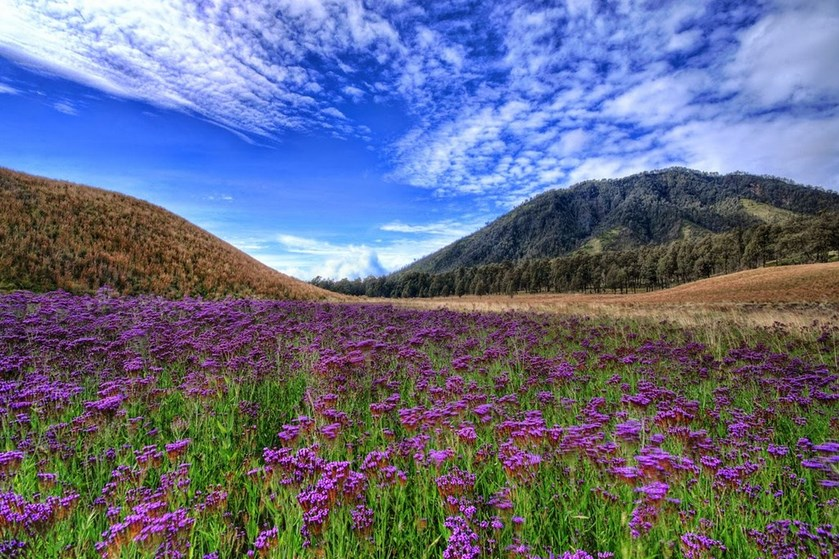 Fakta Unik Menarik dan Misteri Jalur Pendakian Gunung Semeru bukit cinta