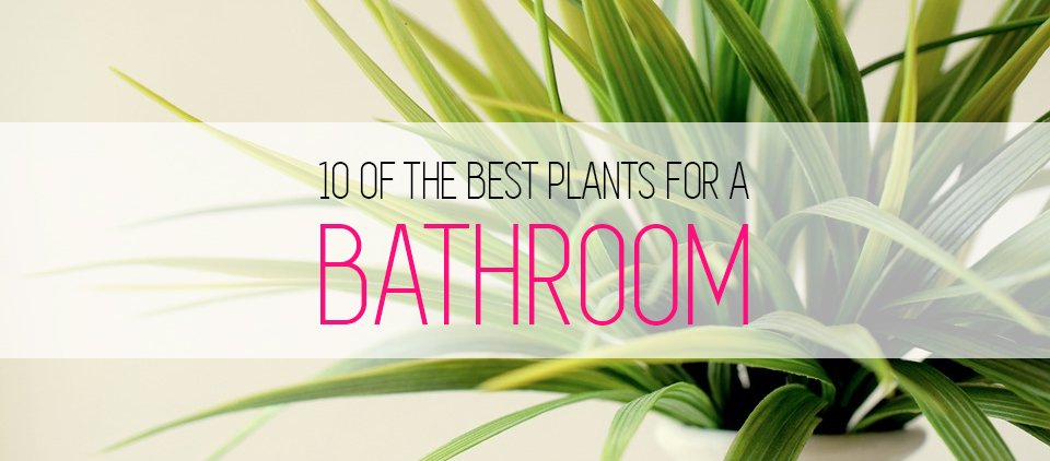 10 Of The Best Plants Bathroom