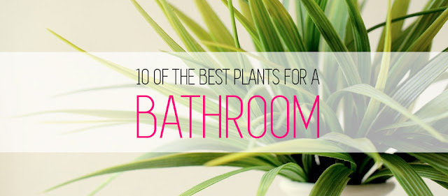 10-of-the-best-plants-bathroom