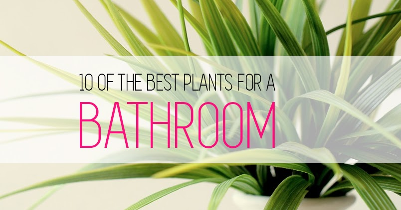 10 Of The Best Plants To Use In A Bathroom   Floriculture Care   House  Plants