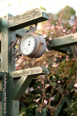 garden clock and flowers