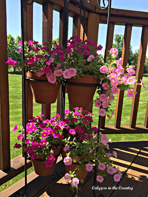 flowers, deck, gardening, pink flowers, hanging baskets