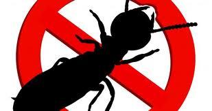 No drill termite treatment