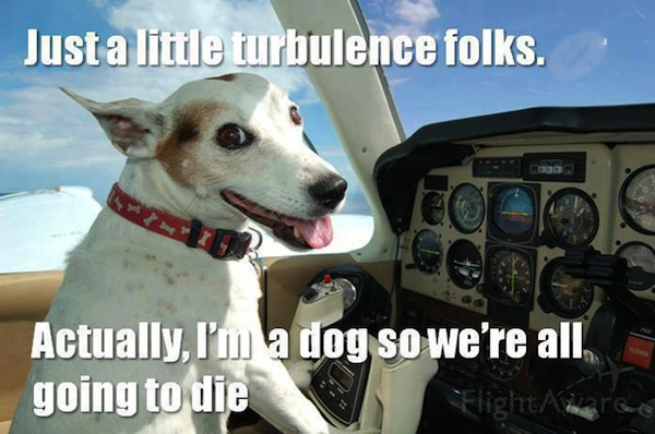 Funny Pilot Dog Joke Caption Image Photo