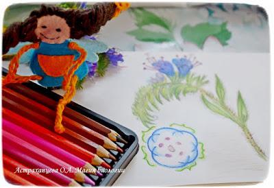 феечки, синяк обыкновенный, диаграмма цветка, рисунок карандашом