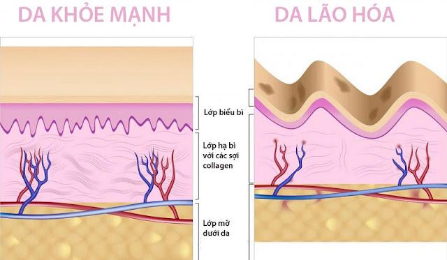 Tác dụng collagen trong làm đẹp da và tăng cường sức khỏe