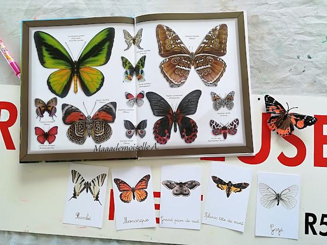 Les papillons Editions Fleurus, cycle de vie du papillon Insect Lore, cartes de nomenclature Papillons Maaademoiselle A. Shop