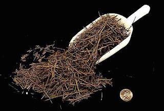 Rễ cây dương sỉ - Tree fern