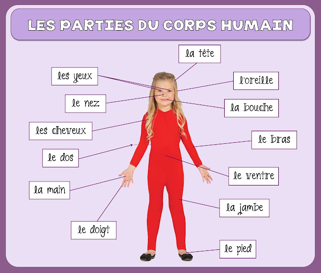 Części ciała - słownictwo 9 - Francuski przy kawie